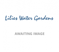 Water Lilies (Lots of summer 2019 special offers) - Special Offers Online Only