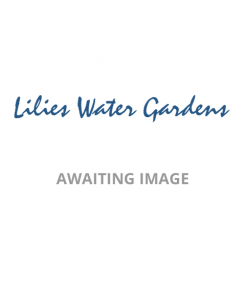 Lelite Waterlily Aquatic Soil-6.5 kg in weight, 10 Litre bags